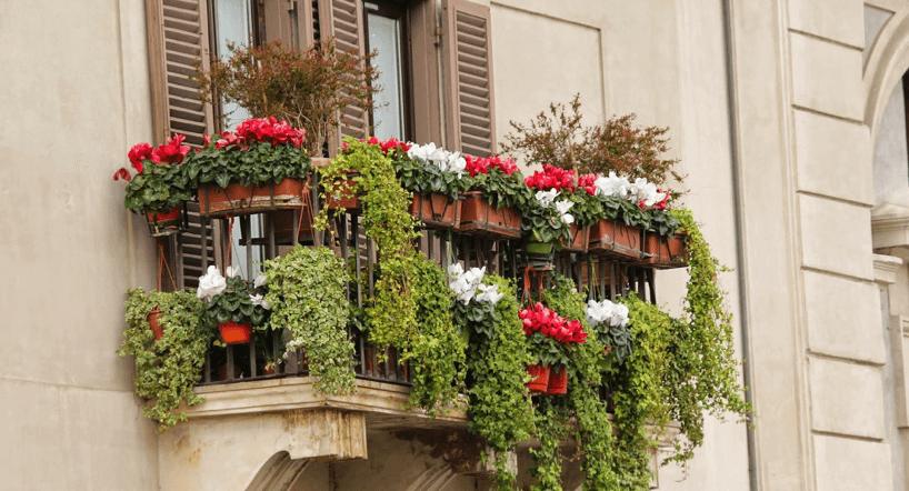 balkon-mit-vielen-grünen-pflanzen